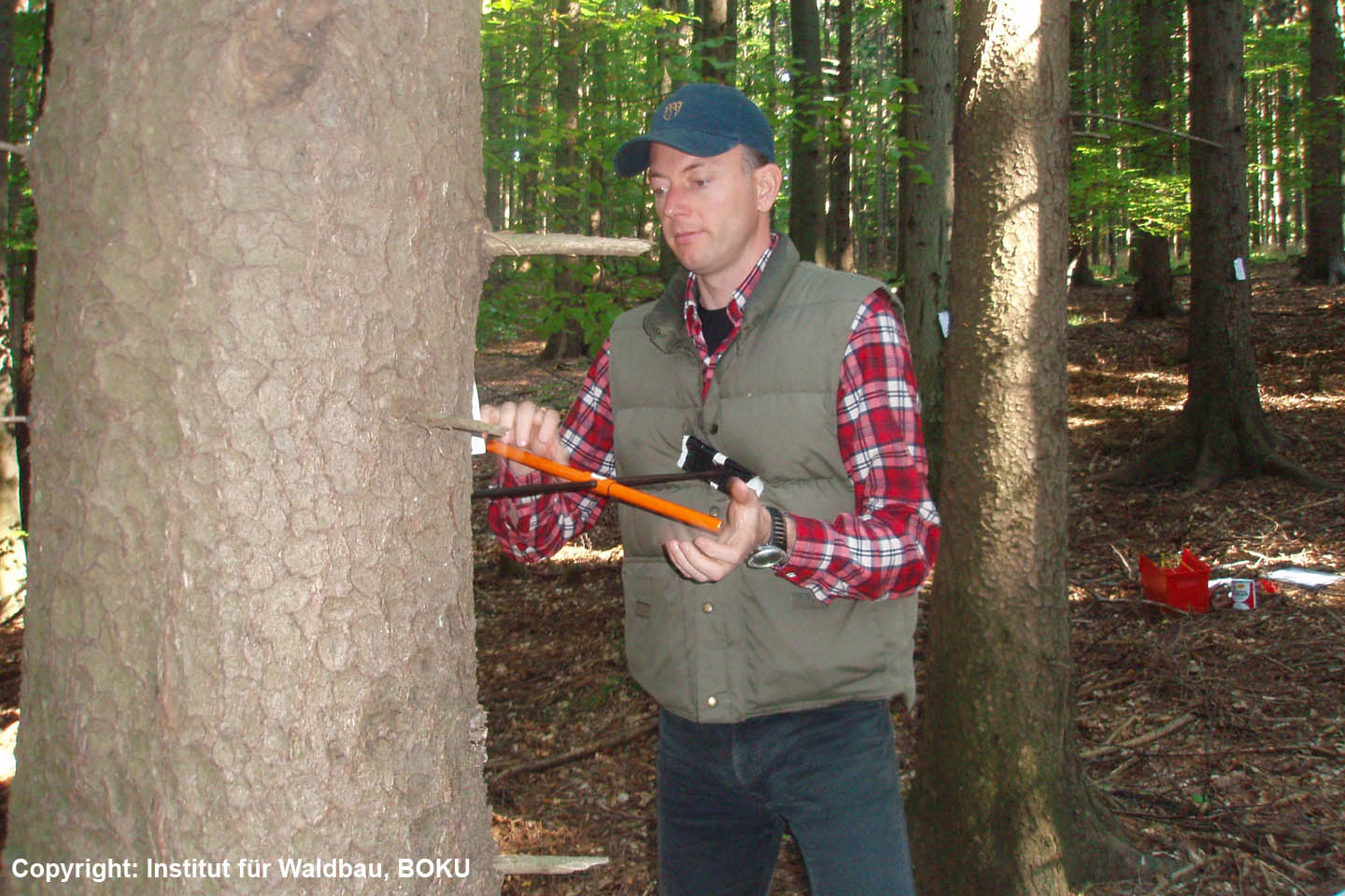 Forest Inventory - Tree ring analysis